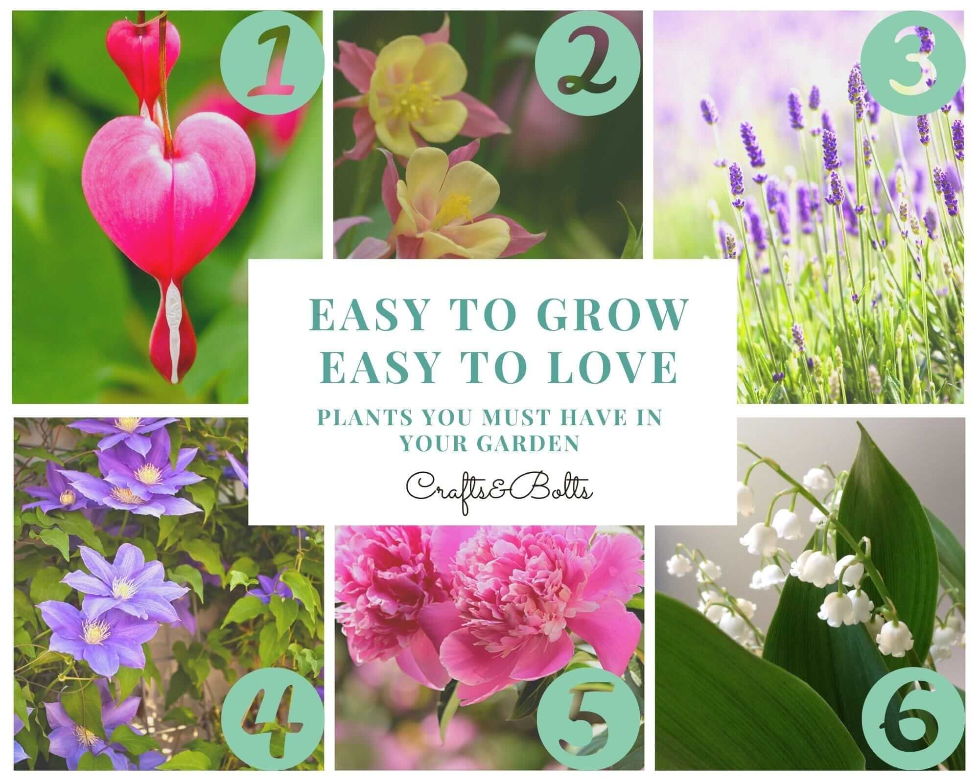 Easy to grow easy to love