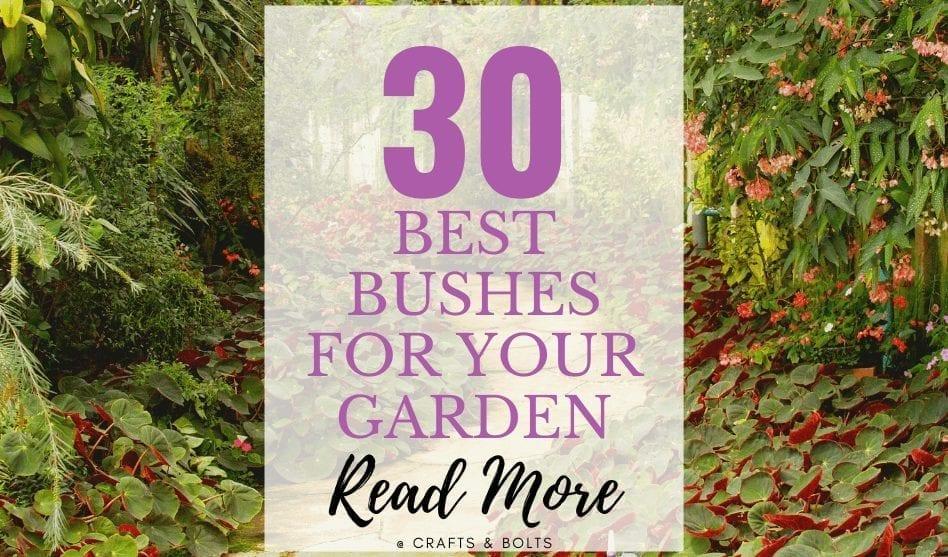 Bushes for the Garden